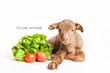 Lamb isolated on white with salad as vegetarian habit