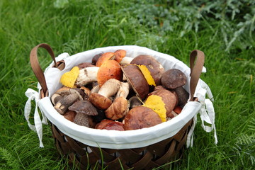 Autumn harvest of mushrooms