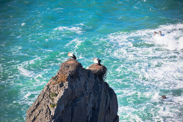Storks on a Cliff at Western Coast of Portugal