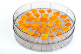 Food dryer with Dried Apricots on a white background