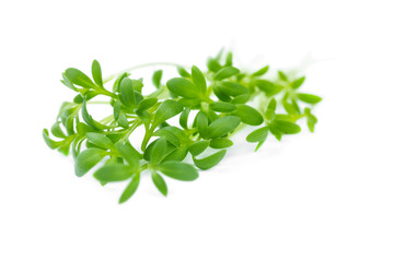 The watercress isolated on white
