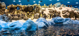 Panoramic of Emperor penguins playing in the snow in a zoo