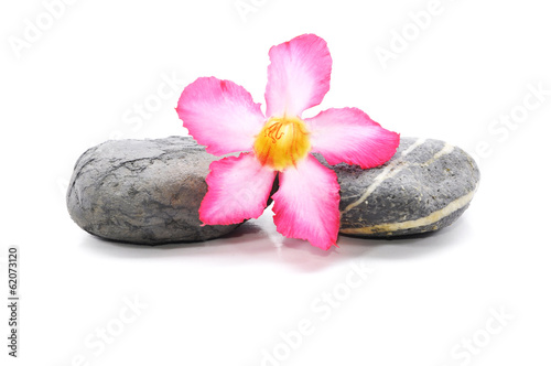 Zen And Spa Stone With Frangipani Flower