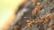 Red weaver ants help together, teamwork concept