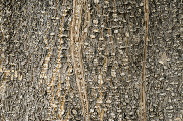 Tree Bark. Detailed.Texture effect.filling the frame