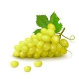 Bunch of grapes on white background. Vector illustration.