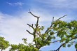 Branches of trees with green leaves and sky background