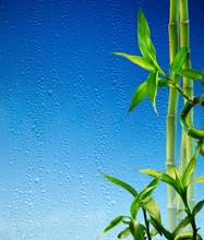 tiges de bambou sur le verre bleu humide - spa fond