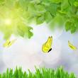 green spring garden with butterflies