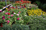 Colourful garden center