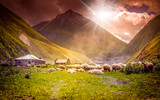 flock of sheep grazing in a mountain valley