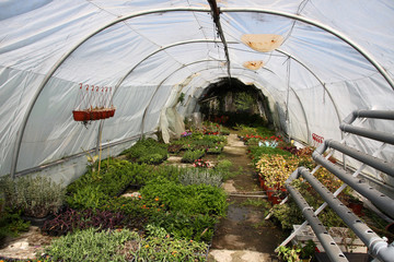 Poly tunnel - greenhouse