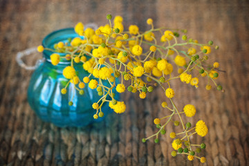 branch of a yellow mimosa flowers in a blue glass vase .