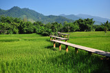 This rice field was taken in Chiangrai Thailand