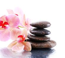 Composition avec une belle floraison d'orchidées avec des gouttes d'eau et