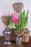 Houseplants in pots with decorative lantern