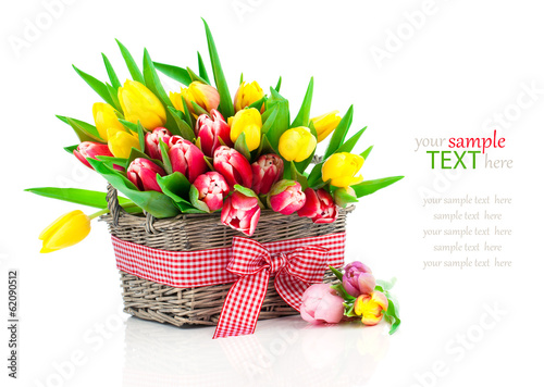 spring tulips in wooden basket, on white background. happy mothe