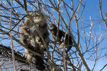 Katzen sind gute Kletterer