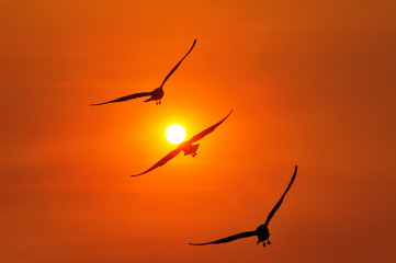 Triple seagull during sunset