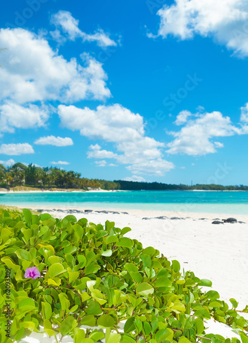 canvas print picture beautiful flowers on the beach