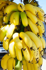 Bunch of small yellow bananas for sale in Crete, Greece
