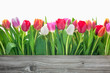 canvas print picture - spring tulips flowers