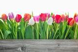 Fotoroleta spring tulips flowers