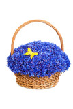 Beautiful blue cornflowers in a basket