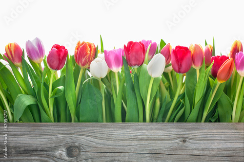 canvas print picture spring tulips flowers