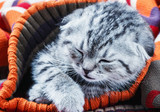 kitten sleeping on a warm wool sweater