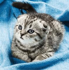 kitten lying on the bed