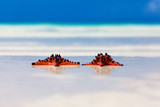 two sea-stars with wedding rings lying on sand beach background