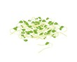 Fresh Mung Beans Sprouts on White Background
