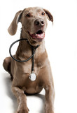 Naklejka Pies ze stetoskopem