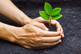 two hands holding a young green plant / planting tree