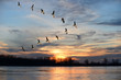 canvas print picture - Canadian Geese Flying in V Formation