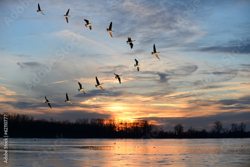 In de dag Vogel Canadian Geese Flying in V Formation