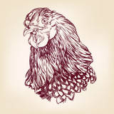 chicken vintage hand drawn vector illustration