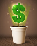 Dollar sign tree coming out of flowerpot