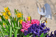 Obrazy na płótnie, fototapety, zdjęcia, fotoobrazy drukowane : fleurs de printemps