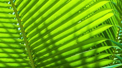 Palm leaves close-up. Tropical abstract background