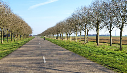 Trees and road along farmland in winter