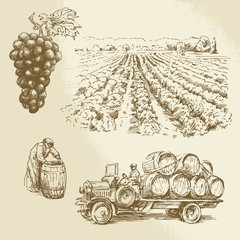 vineyard, harvest, farm - hand drawn collection
