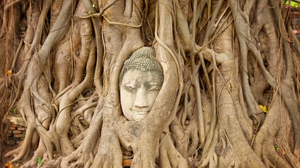 Stone face buried in the roots of a tree. Thailand, Ayutthaya