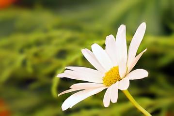 white macro plants