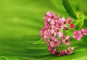 small macro plants