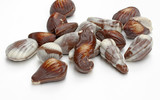 Seashell Chocolates
