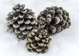 Isolated Pine cones