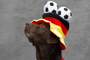 Labrador mit Hut