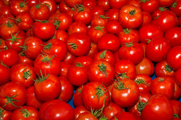 Fresh harvest of delicious tomatoes
